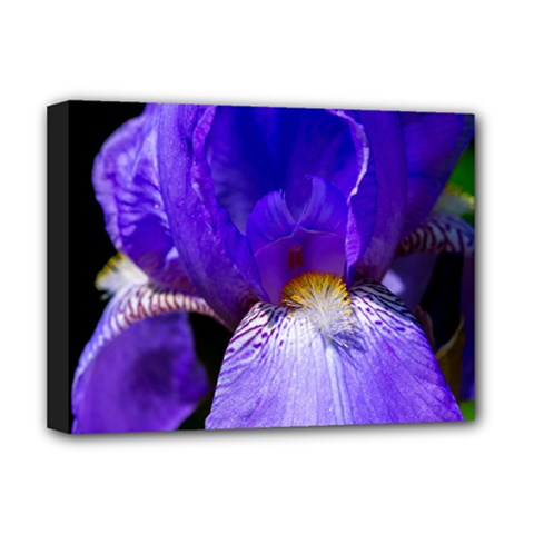 Zappwaits Flower Deluxe Canvas 16  x 12  (Stretched)