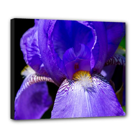 Zappwaits Flower Deluxe Canvas 24  x 20  (Stretched)