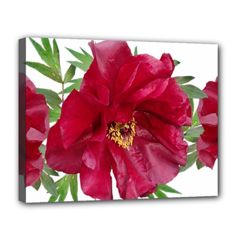 Flowers Red Peony Arrangement Canvas 14  X 11  (stretched)