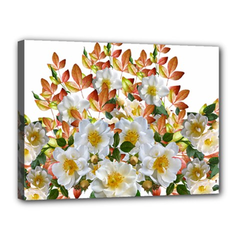 Flowers Roses Leaves Autumn Canvas 16  X 12  (stretched)