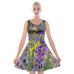 Mary Helen s Spanish Thistles Velvet Skater Dress