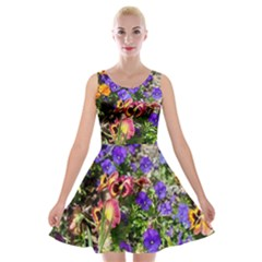 Mary Helen s A Profusion Of Spanish Flowers Velvet Skater Dress