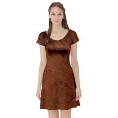 Fur Skin Bear Short Sleeve Skater Dress by HermanTelo