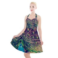 Bird Biology Fauna Material Chile Peacock Plumage Feathers Symmetry Vertebrate Peafowl Halter Party Swing Dress