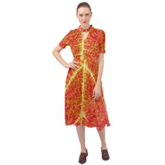 Plant Vineyard Wine Sunlight Texture Leaf Pattern Green Red Color Macro Autumn Circle Vein Sunny  Keyhole Neckline Chiffon Dress