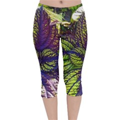 Dark Coleus Velvet Capri Leggings