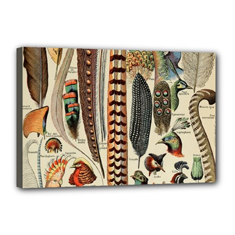 Feathers Birds Vintage Art Canvas 18  X 12  (stretched)