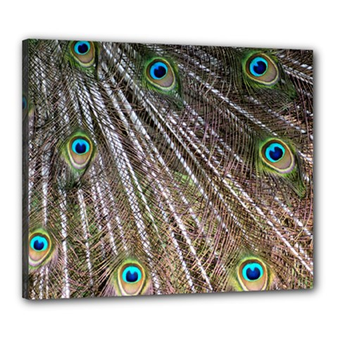 Peacock Feathers Pattern Colorful Canvas 24  X 20  (stretched)