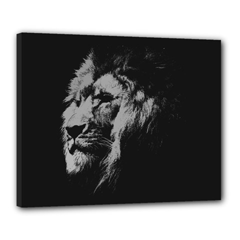 African Lion Canvas 20  X 16  (stretched) by goljakoff