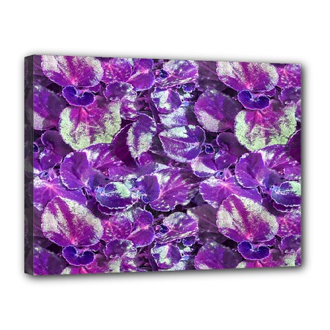 Botanical Violet Print Pattern 2 Canvas 16  X 12  (stretched) by dflcprintsclothing