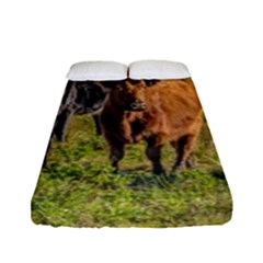 Cows At Countryside, Maldonado Department, Uruguay Fitted Sheet (full/ Double Size) by dflcprints
