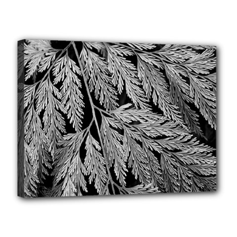 Fern Leaves Foliage Black And White Canvas 16  X 12  (stretched) by Vaneshart