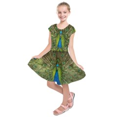 Peacock Feathers Bird Nature Kids  Short Sleeve Dress