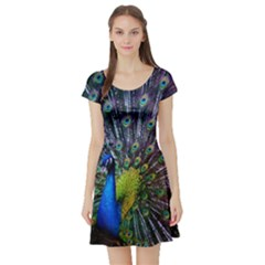 Peacock Colors Bird Colorful Short Sleeve Skater Dress
