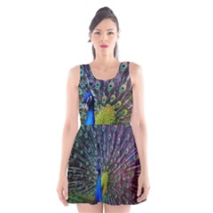Peacock Colors Bird Colorful Scoop Neck Skater Dress