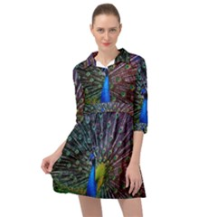 Peacock Colors Bird Colorful Mini Skater Shirt Dress