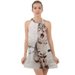 Laughing Kitten Halter Tie Back Chiffon Dress by Sparkle