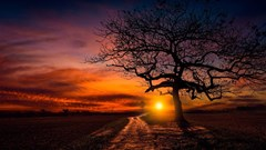 lonely tree sunset wallpaper