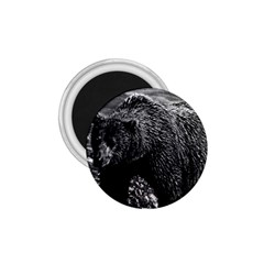 Vintage Usa Alaska Brown Bear 1970 Small Magnet (round) by Vintagephotos