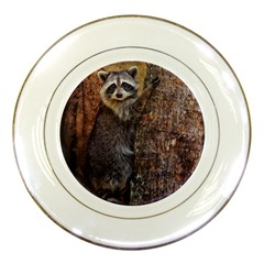 Raccoon Porcelain Display Plate by heathergreen
