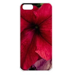 Red Peonies Apple Iphone 5 Seamless Case (white) by Elanga