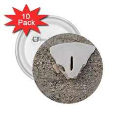 Quarter Of A Sand Dollar 10 Pack Regular Button (round) by Elanga