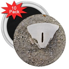 Quarter Of A Sand Dollar 10 Pack Large Magnet (round) by Elanga