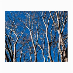 Trees On Blue Sky Twin Sided Glasses Cleaning Cloth by Elanga