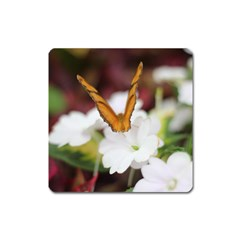 Butterfly 159 Magnet (square) by pictureperfectphotography