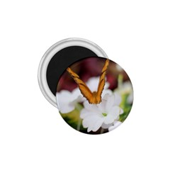 Butterfly 159 1 75  Button Magnet by pictureperfectphotography