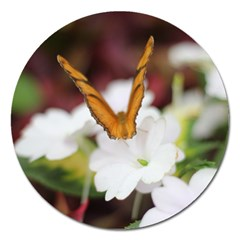 Butterfly 159 Magnet 5  (round) by pictureperfectphotography