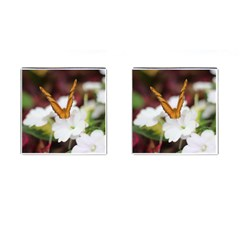 Butterfly 159 Cufflinks (square) by pictureperfectphotography