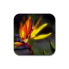 A Beautiful Bird Of Paradise Drink Coasters 4 Pack (square) by designsbyvee