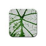 Leaf Patterns Drink Coasters 4 Pack (Square) Front