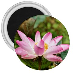 A Pink Lotus 3  Button Magnet