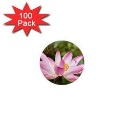 A Pink Lotus 1  Mini Button Magnet (100 Pack) by natureinmalaysia