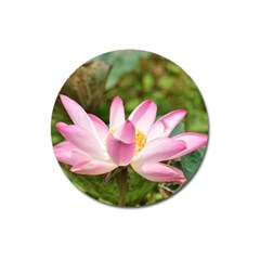 A Pink Lotus Magnet 3  (round) by natureinmalaysia