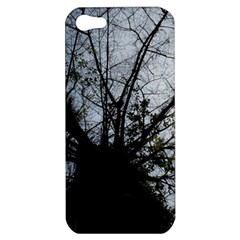 An Old Tree Apple Iphone 5 Hardshell Case by natureinmalaysia