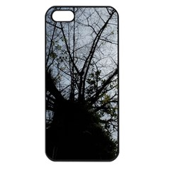 An Old Tree Apple Iphone 5 Seamless Case (black) by natureinmalaysia