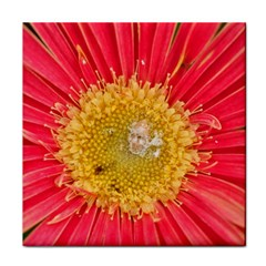 A Red Flower Ceramic Tile by natureinmalaysia