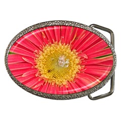 A Red Flower Belt Buckle (oval) by natureinmalaysia