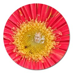 A Red Flower Magnet 5  (round) by natureinmalaysia