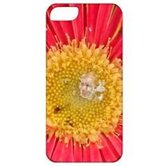 A Red Flower Apple Iphone 5 Classic Hardshell Case by natureinmalaysia