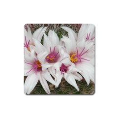 Bloom Cactus  Magnet (square) by ADIStyle