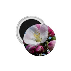 Apple Blossom  1 75  Button Magnet by ADIStyle