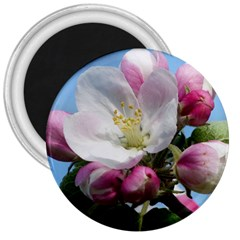 Apple Blossom  3  Button Magnet by ADIStyle