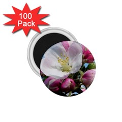 Apple Blossom  1 75  Button Magnet (100 Pack) by ADIStyle
