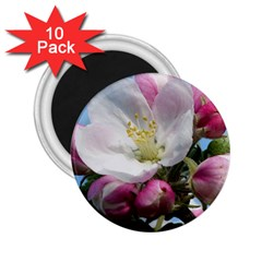 Apple Blossom  2 25  Button Magnet (10 Pack)