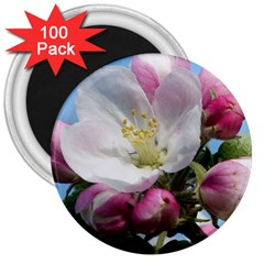 Apple Blossom  3  Button Magnet (100 Pack) by ADIStyle