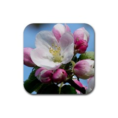 Apple Blossom  Drink Coasters 4 Pack (square) by ADIStyle